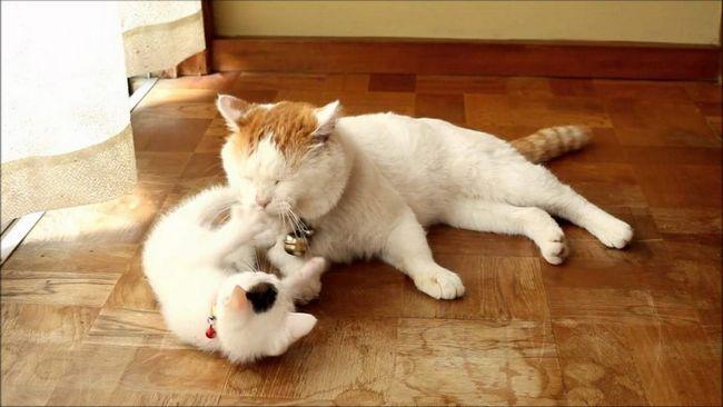 Якщо кішок дві, то їх можна застати навіть за грою в хованки.