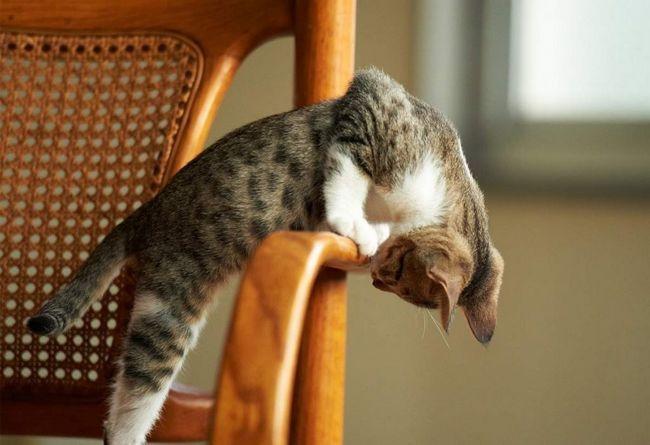 Граючи з кішками, необхідно дати зрозуміти, що ідея гри належить саме їм.