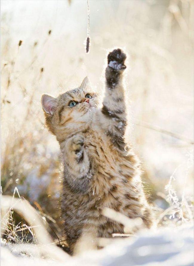 Багато кішки можуть грати як з господарем, так і поодинці.