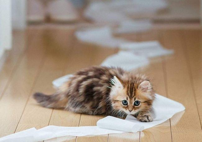Багатьом кішкам подобається звук шурхоту.