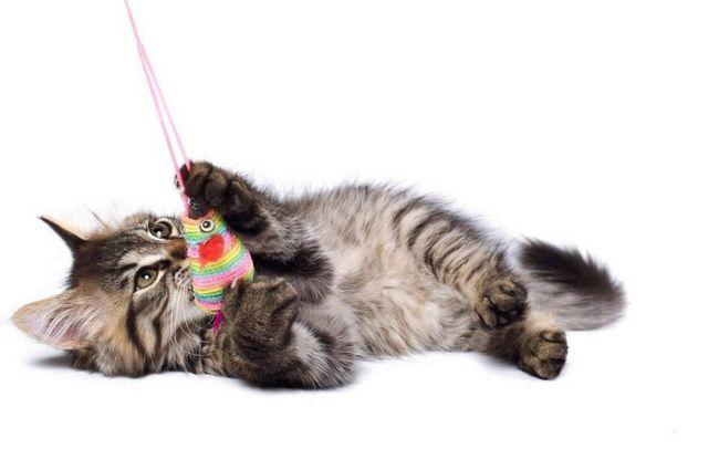 Дуже захоплюючою грою для кішок є фальшива миша.