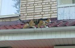 Як зробити кішку, постійно живе в квартирі, більш щасливою?