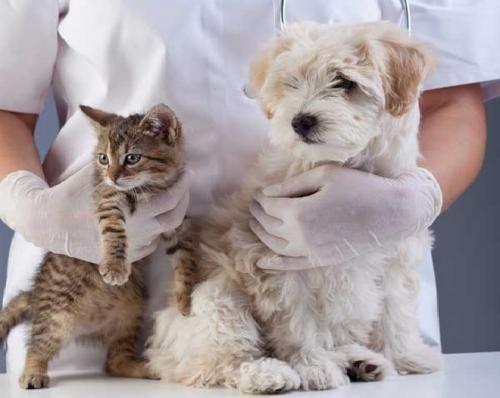 Як отримати максимум від візиту до ветеринара