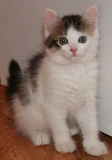 Як зменшити стрес кішки від візиту до ветеринара?