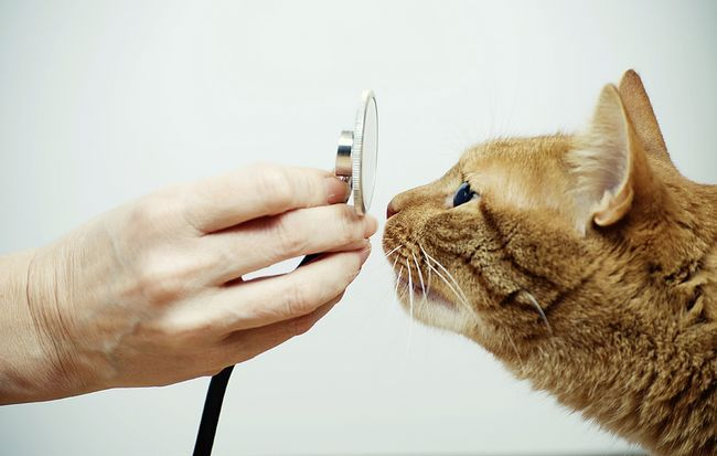 Як вибрати хорошого ветеринара