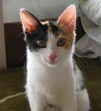 Як вибрати кішку, яка підходить саме для вашої родини?