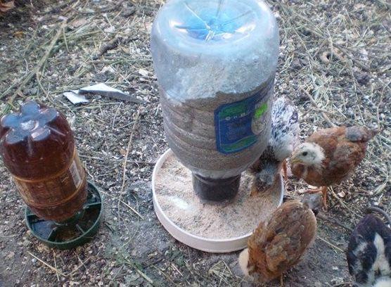 Як вирощувати курчат бройлерів після інкубатора