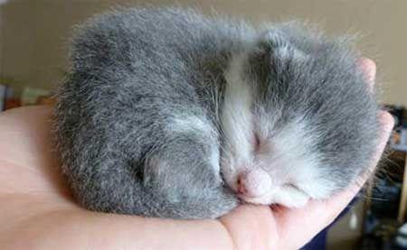 Як виростити кошенят без кішки.