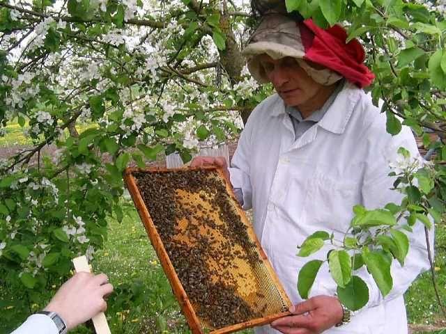 Ротаційна система бджільництва