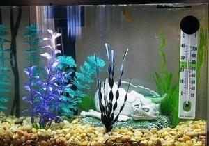 Яка оптимальна температура води в акваріумі