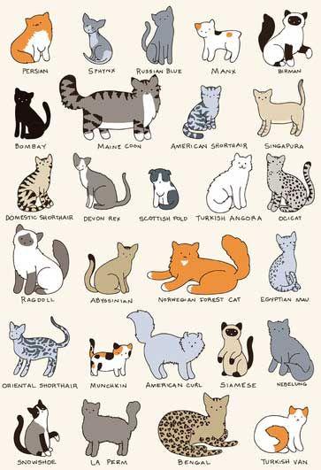 Які цілі повинна переслідувати селекційна робота з кішками?