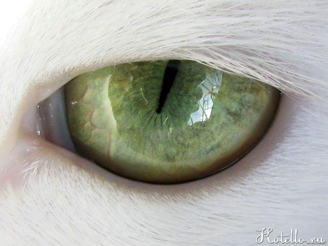 котячий погляд