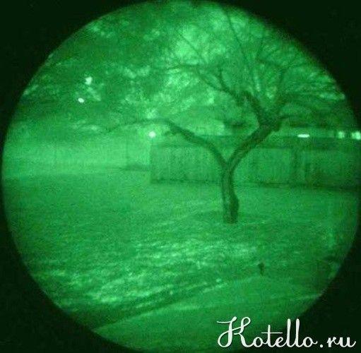 Приблизно таку картинку бачать кішки вночі в темряві