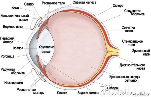 Будова котячого ока