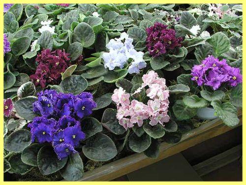 Які кімнатні квіти краще тримати вдома