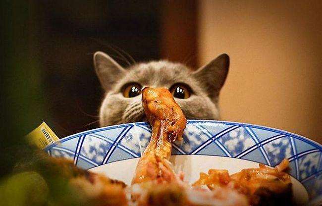 Які продукти можна дати кішці зі столу