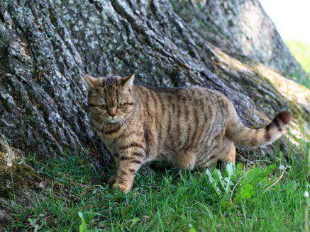 Яким чином відучити кота позначати територію
