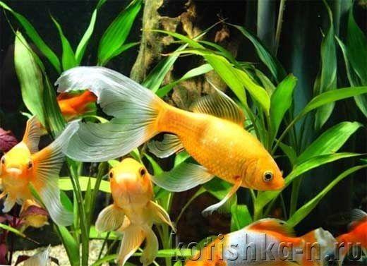 Яка кількість риб в акваріумі оптимально і чим загрожує перенаселення акваріума?
