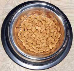 Вибір типу корму для кішки