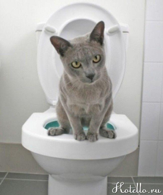 Кішка, якій не потрібен наповнювач ...