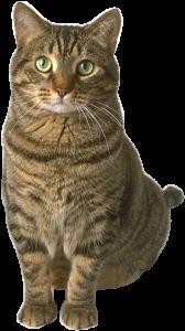 Яку користь приносять кішки