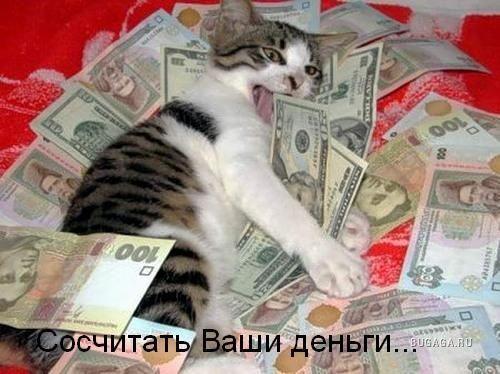 Чим корисна кішка
