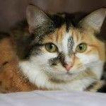 Кантарія для кота