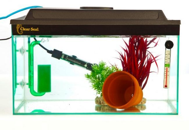 Карантизаціі акваріумних рибок