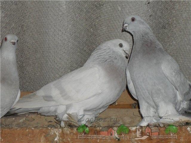 Самець і самка стосується