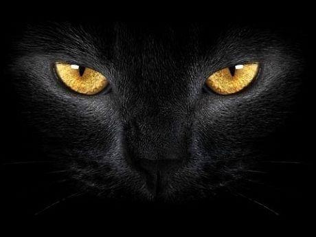 Це цікаво: котяче зір