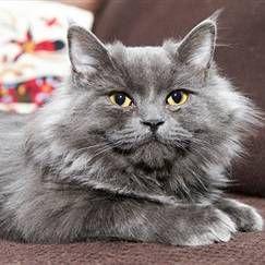 Кастрація котів: за і проти, вік для операції