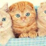 Катозал для кішок