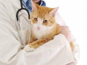Консультація ветеринара