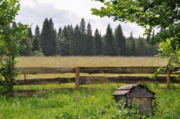 Кіровське бджільництво - гордість приволжья