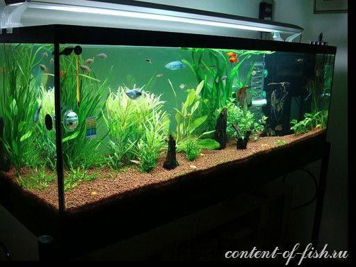 гарний акваріум