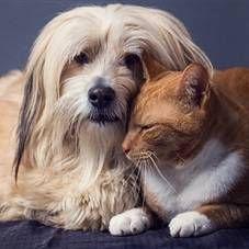 Кліщі у тварин: види, симптоми, заходи профілактики, лікування