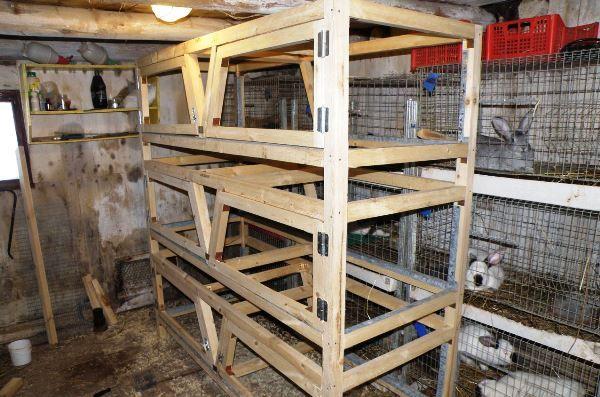 Клітини для промислового розведення кроликів - чи можна зробити самому