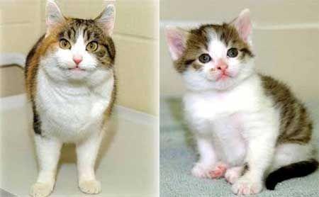Клонування кішок (і інші репродуктивні технології) - за і проти.