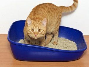 Проблема циститу у кішки
