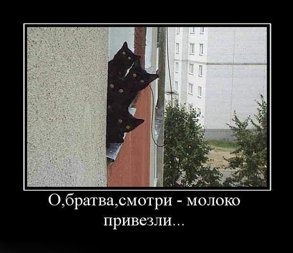 Команда місце для кішок