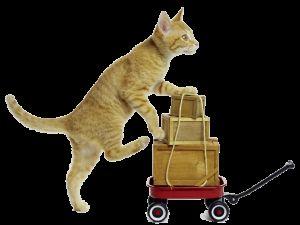 Команди для кішок