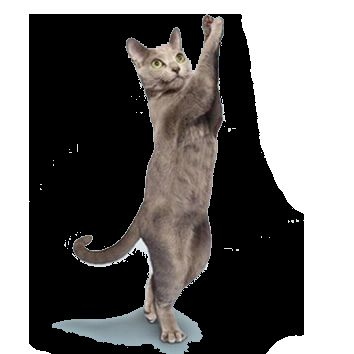Команда для кішок: «Стояти!»