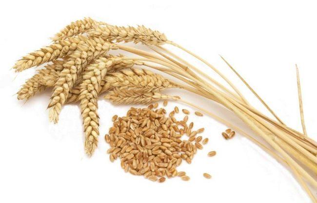 Колосся пшениці і зерно