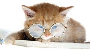 Контактні лінзи для кішок