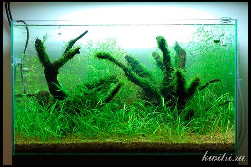 як зробити корч для акваріума