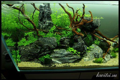 корчі для акваріума