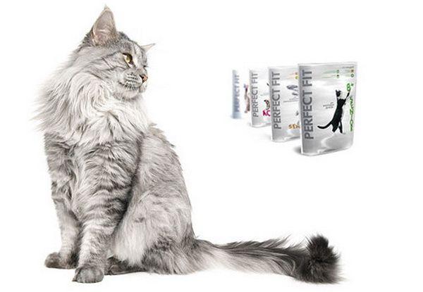 Сірий кіт на білому тлі
