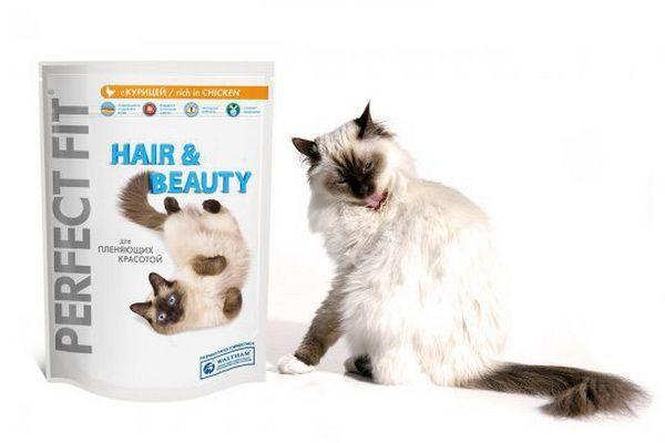Красива кішка на білому тлі