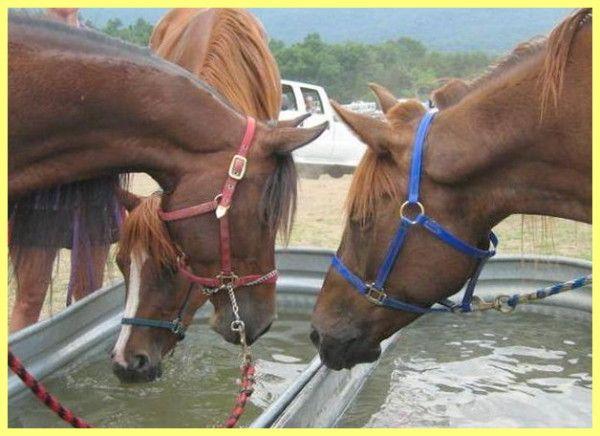Годівля та утримання робочих коней: і догляд за ними