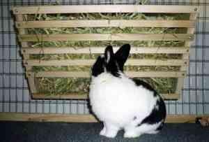 Як виготовити годівниці для кроликів своїми руками